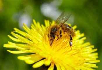 Jackie, the bee