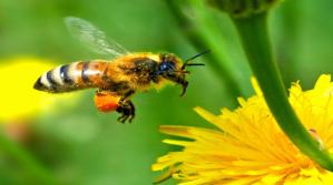 jack-the-bee