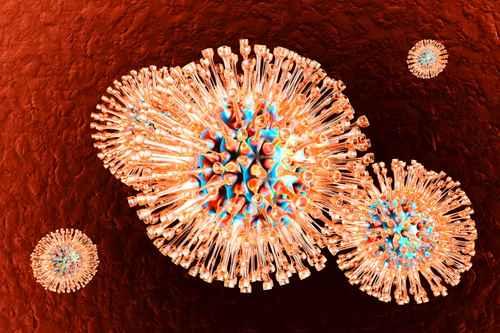 Herpes Viruses.