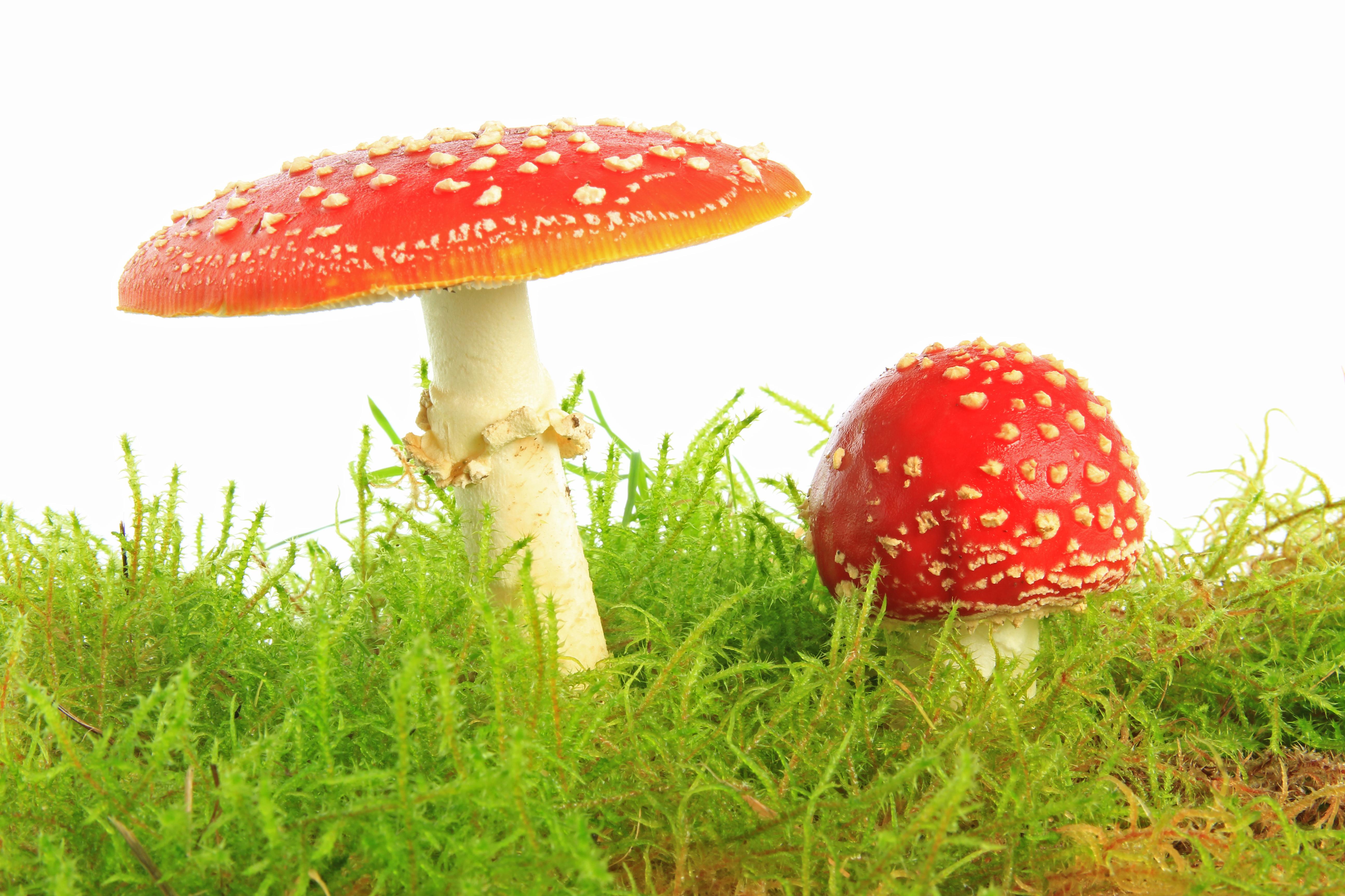 A melhor medicina de um fungo de pés de pernas