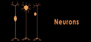 neuronios-banner