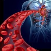 Células sanguíneas e coração