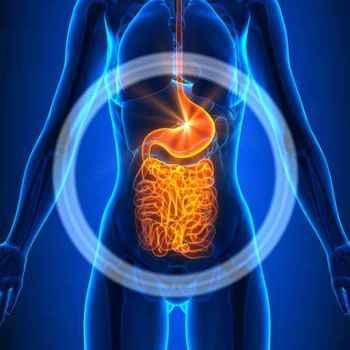 Guts - Female Organs - Human Anatomy