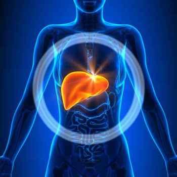 Liver - Female Organs - Human Anatomy