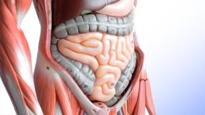 O tecido intestinal, desdobrado, ocuparia uma área equivalente a de um campo de futebol!