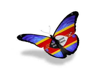 Swaziland flag butterfly flying, isolated on white background