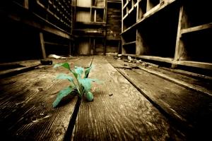 A esperança é assim... Um pequeno broto verde, buscando a luz, no mais inóspito e improvável lugar! E quando chega... É derepente